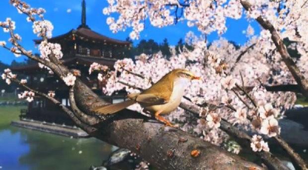 Bird-Demo auf Wii U